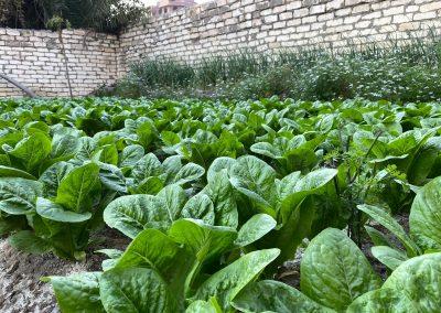 Abbassa-Garden