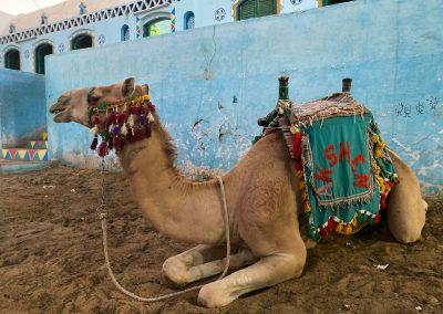 Camel-Nubian-Village