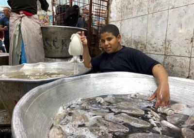 Cuttlefish-Egypt