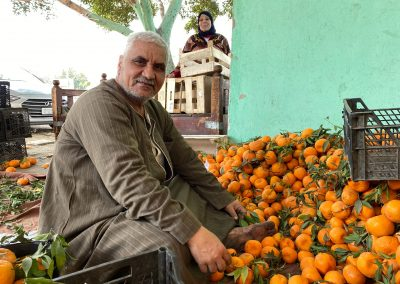 Oranges-in-Egypt